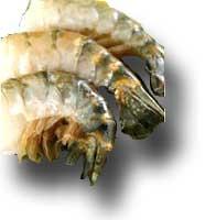 Prawn Shell