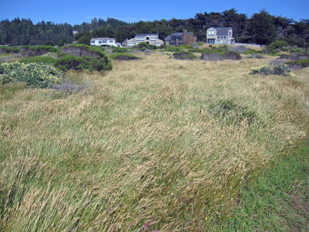 sea grasses wave in the wind along the bluff trail
