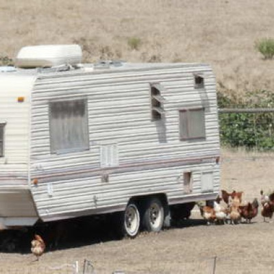 hens at their swell trailer in the heat of day