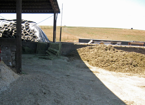 PtR_feed_silage