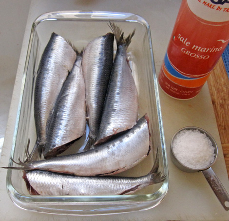 sardines ready for salting