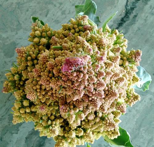 Surprise romanesco cauliflower